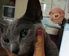 抱っこしてください。