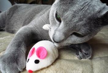 ネズミとあそぶんです!