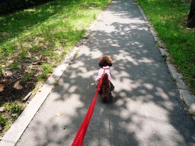 お散歩でしゅ。