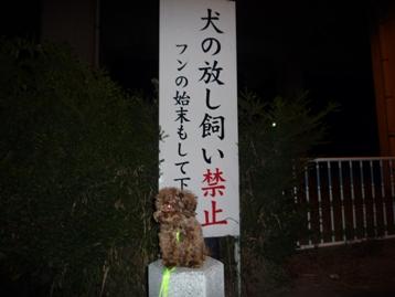 夜のお散歩!