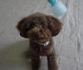 歯磨きですよ~