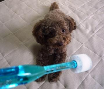 歯ブラシですよ~