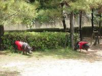 木陰で草むしり=おやつ♪