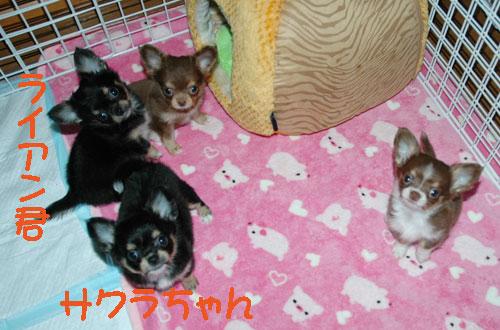 d-kyoudai-16.jpg