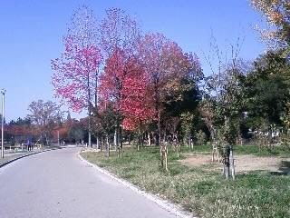久宝寺公園1