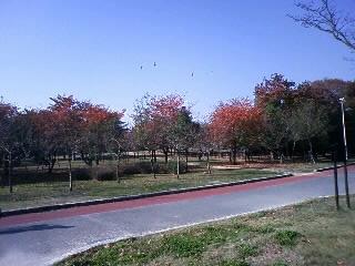 久宝寺公園2