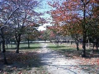 久宝寺公園3