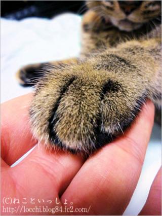 ラヴィの手。