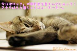 寝ちゃうにょ。<ラヴィ。>