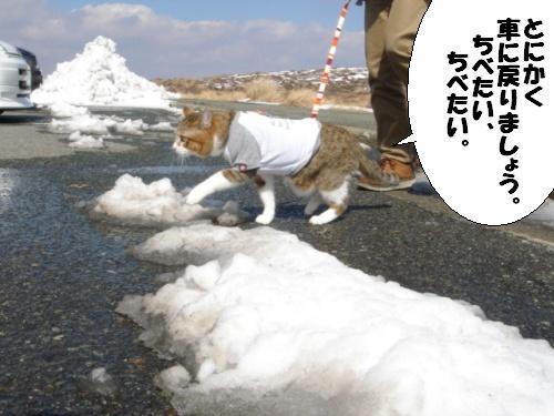 路面も冷たくてかないません