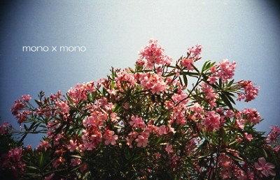 ピンク色の夾竹桃