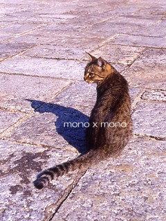 公園にいた人懐こい野良猫この猫以外に母猫と子猫もいたしかも皆そっくり(笑)
