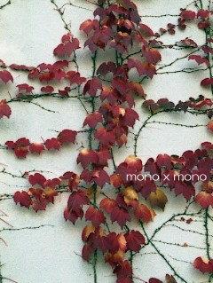 真っ赤に色付いたツタの葉