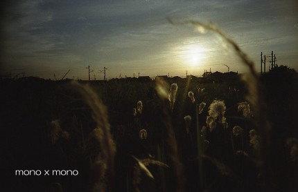 移転前ブログ『Lono*Lab』にUPしていた写真ノーファインダーで夕陽に輝く「チガヤ」を撮った