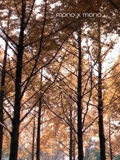 赤や黄色の紅葉ばかりが美しいわけではない茶色く枯れた葉も光を透かしてキラキラと美しい