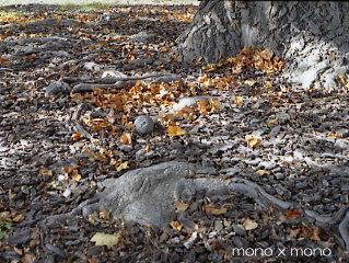 ゆりの木の古木は太い根を大地にはりめぐらせ地球の命を宿してゆく何時か この木が朽ちたときそこには新しい芽が育つだろう