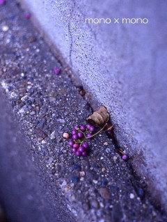 これは紫式部という花の実
