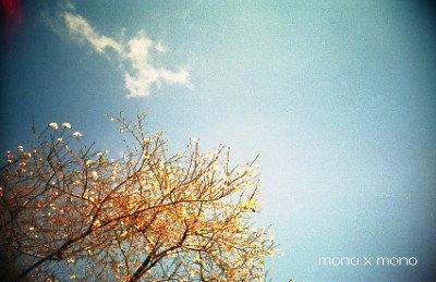 十月桜が咲いていた頃の空