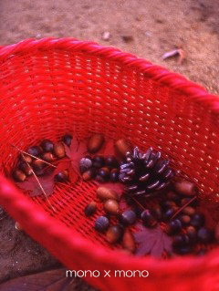 真っ赤なカゴに拾い集めた秋の木の実たちこの後、どんぐりには目鼻が付き松ぼっくりにはビーズがちりばめられてミニXmasツリーに変身した