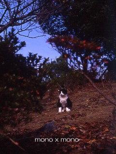 公園にいた少し薄汚れたこの野良猫くんは餌を求め媚びて鳴くことをせずこれ以上近付くことを許さない