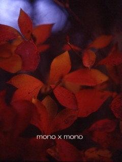 シャッタースピードの設定を間違えたおかげで、葉っぱが自ら光を放っているようなそんな写真が撮れた。結果オーライ。