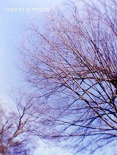 神社の境内の大銀杏は空へ空へと伸びをする