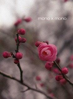 花開こうとする梅を 冷たい風が邪魔をする。もうちょっと、もう少し。春はすぐ そこ
