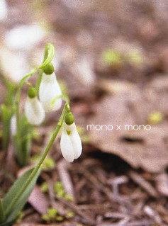 開花前のスノードロップは緑の帽子に白い衣を羽織った小さな妖精のように見えるね