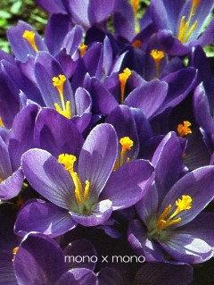 春だ!春だ!と喜んでいるようなそんな花たちが一斉に咲き出しました