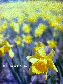 小さな丘一面が黄色に染まる吹く風も春色。こころもウキウキ