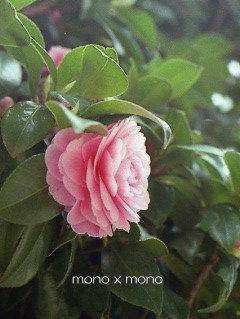 かなりの時間差で、この花をアップピンときた人は先月南青山に行かれた方かとw