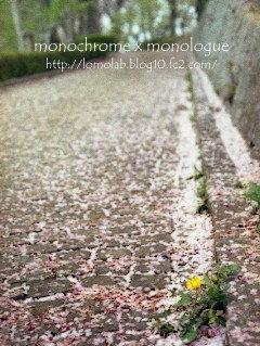 この坂道の本当の名前は知りません桜の花びらでピンクに染まっていたので勝手に『桜坂』と命名しちゃいました