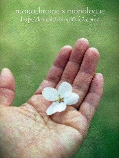 チビトラちゃんから私の手のひらに桜の花のプレゼントありがとう ありがとう