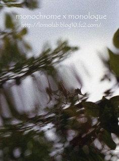 水に映ったイカリソウ風が水面を揺らして花も空も 歪んで揺れた