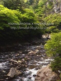 鮮やかな新緑と渓流を流れる水の音森林浴とマイナスイオンリフレッシュしてきました