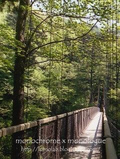 風の強い日に吊り橋を渡るのはとーってもスリリング(汗)