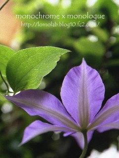 美しい花は、裏側も美しい