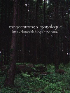 ひんやりと湿った空気薄暗い森の奥に何があるんだろう?