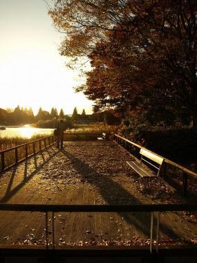 071123_昭和記念公園(紅葉)_126