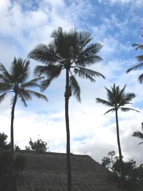 061116_ハワイ_ポリネシアカルチャー文化センター_029