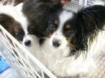 デイジー&エリィー