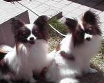 ハニ&ミカ
