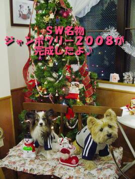 DSC06681tree.jpg
