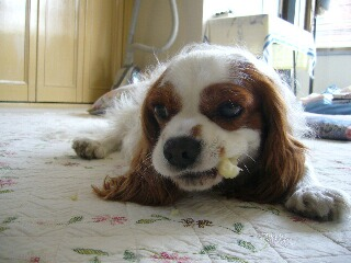 キャベツの芯食べてます。