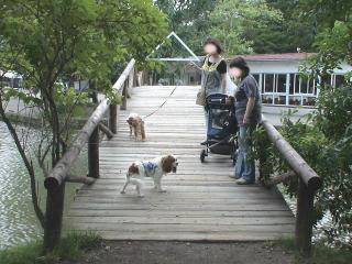 橋の上で~