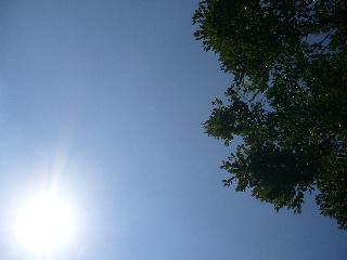真っ青な空だね~