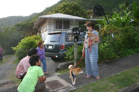 ハワイの柴犬09