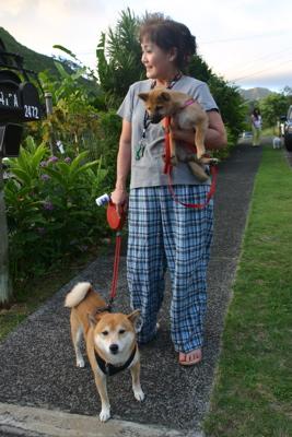 ハワイの柴犬11