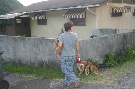 ハワイの柴犬12