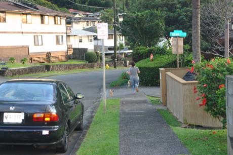 ハワイの柴犬13